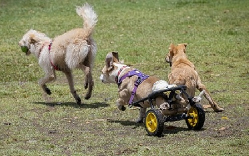 cart-and-other-dogs