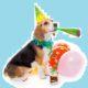 dog party animal