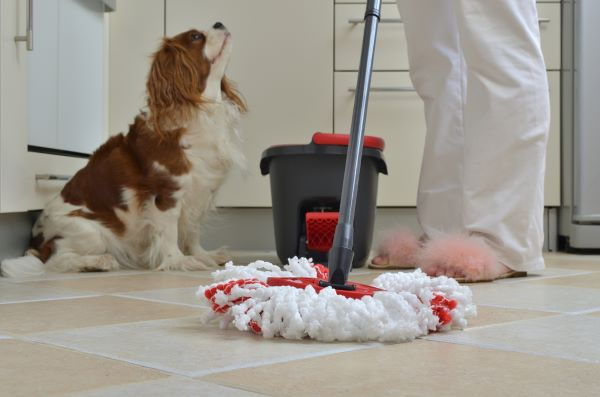 Dog sitting next to a mop