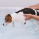 Dog in hydrotherapy pool