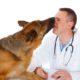 Help with high veterinary bills