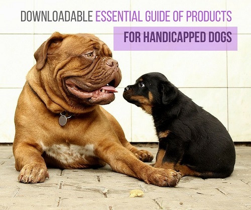 Free Essential of Products for Handicapped Dogs