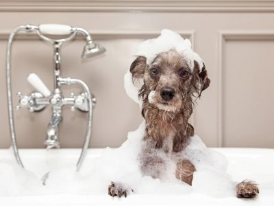 Dog taking bubble bath