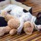 Dog sleeping in orthopedic dog bed