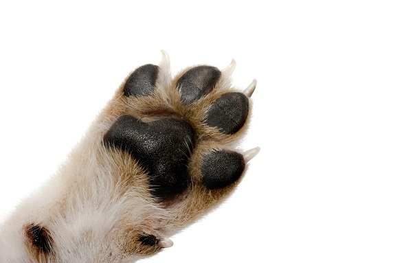 Dog paw care and nail trims