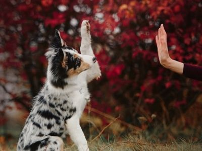 Dog giving high-five for paw care