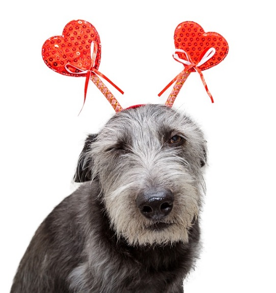 Dog with Valentine's Day decorations.