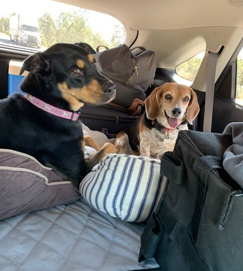 Two dogs taking a road trip