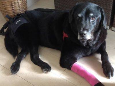 Dog wearing compression sleeve