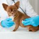 Dogs with spine problems are prone to urinary tract infections.