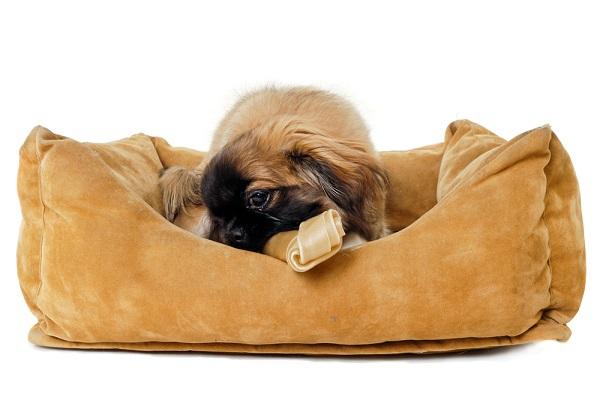 Dog in orthopedic bed