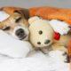 Dog sleeping in waterproof dog bed