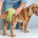 Dog diapers should be changed often to prevent urine scald.