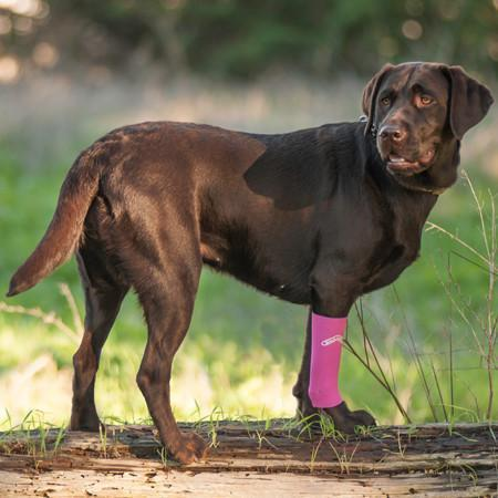 Dog wearing a compression sleeve