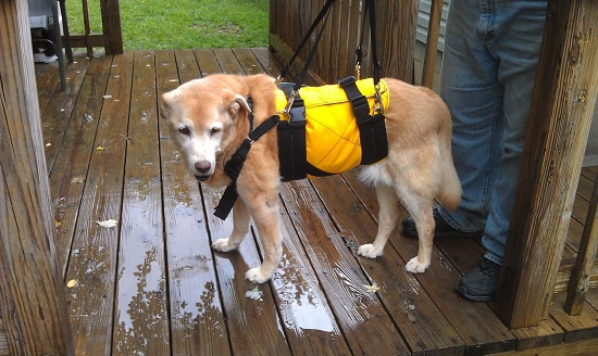 AST support dog harness