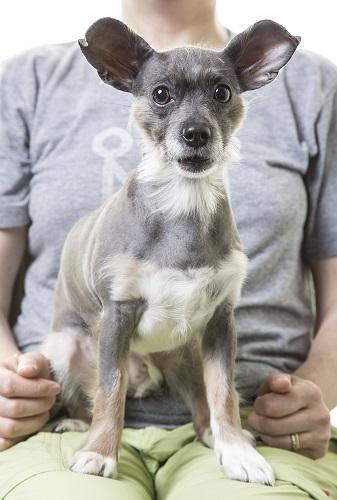 Dog sitting in pet sitter's lap.