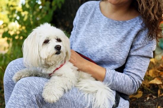 Pet sitter holding a dog
