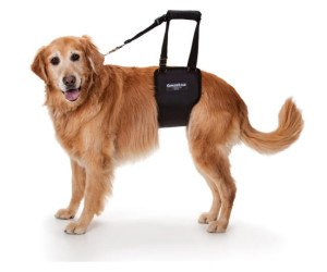 GingerLead dog support harness