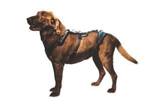 Help 'Em Up dog support harness