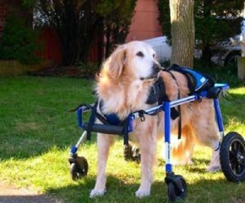 Full support dog wheelchair from Walkin' Wheels