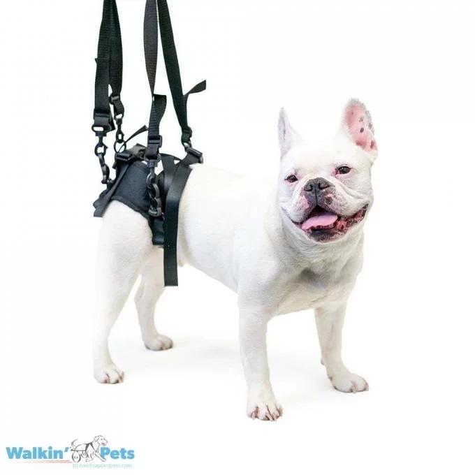 Walkin' Pets rear support harness