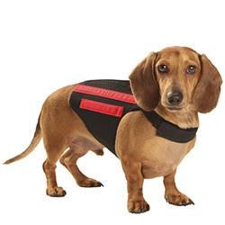 WiggleLess dog back brace