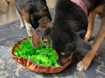 Two dogs playing with a snuffle mat for dogs