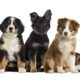 Dog birth defects can strike any puppy breed.