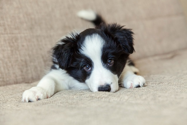 Dog birth defects can affect any breed
