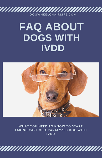 FAQ about dogs with IVDD
