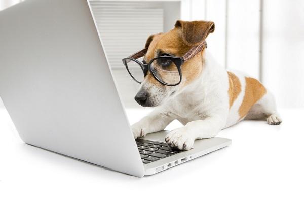 Dog sitting at computer