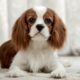 Cavalier King Charles Spaniels are prone to strokes in dogs.